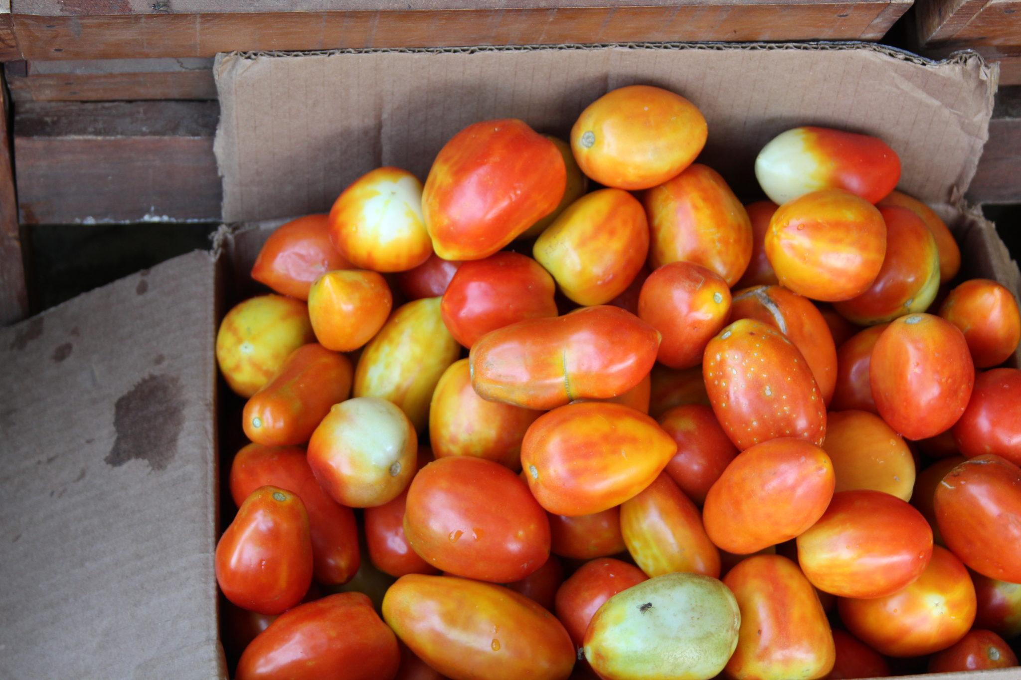 Tres kilos de tomate en Barquisimeto sobrepasan el salario mínimo mensual